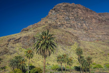 Tall Palmtrees And The Landscape Of La Gomera