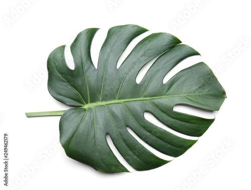 Poster Vegetal Fresh tropical monstera leaf on white background