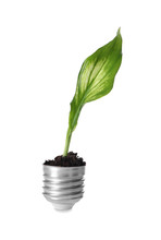 Green Plant Growing In Light Bulb Cap On White Background. Ecology Concept