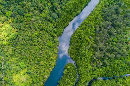 Photo sur Toile Rivière de la forêt Tropical rain forest mangrove river and green tree on island