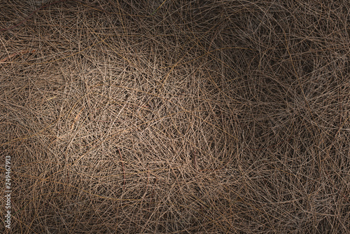 Fotografia  full frame image of a fallen twigs on ground with sunlight and shadows