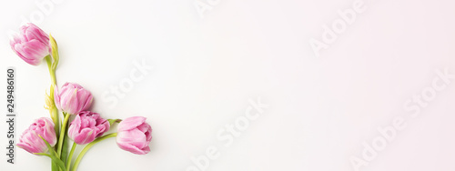 Pink tulips on white background with copy space Wallpaper Mural