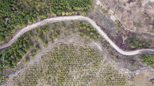 Foto op Plexiglas Groene Vista aerea de camino sinuoso por un bosque