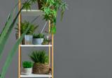 Evergreen plants in pots on the bookshelf