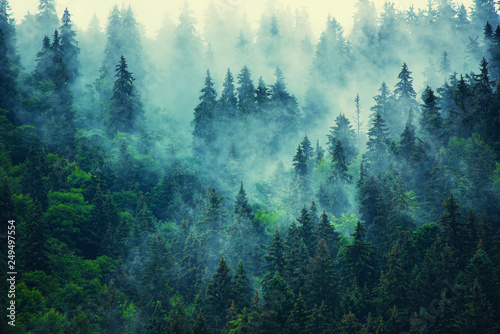 Misty mountain landscape - 249497554