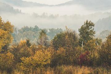 FototapetaFoggy autumn landscape