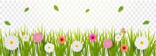 Gerbera Daisy Flowers Decorate...