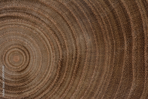 Fototapety, obrazy: Growth Rings Background
