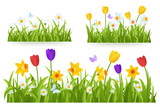 Fototapeta Tulipany - Spring grass border with early spring flowers and butterfly isolated on white background. Illustration of colored tulips, daffodils and daisies. Garden bed. Springtime design element. Vector eps 10.