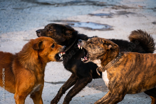 Three dogs are fighting Wallpaper Mural