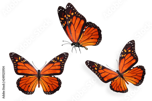 Photo set of colored tropical butterflies isolated on white background