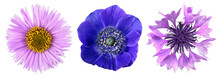 Three Different Blue And Purple Flowers Close-up Isolated On White Background