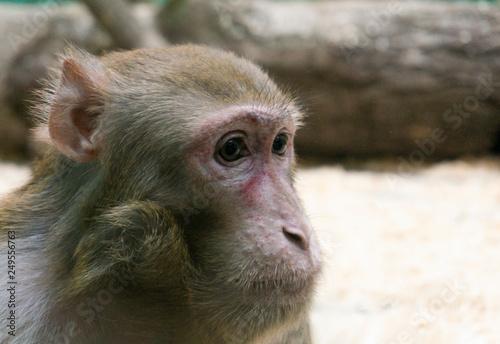 In de dag monkey look on right