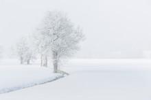 Bäume Im Nebel Mit Raureif Be...