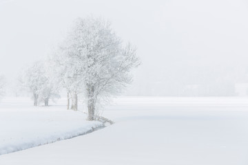 Drzewa we mgle pokryte szronem