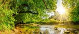 Fototapeta Las - Beautiful forest panorama with brook and bright sun shining through the trees