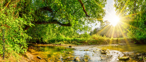 Canvas Print Beautiful forest panorama with brook and bright sun shining through the trees