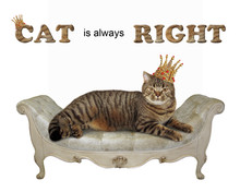 The King In A Golden Crown Is Lying On The Retro Couch. Cat Is Always Right. White Background.