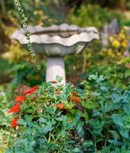 Birdbath And Red Flowers