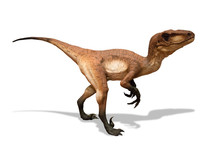 Velociraptor Isolated On White...