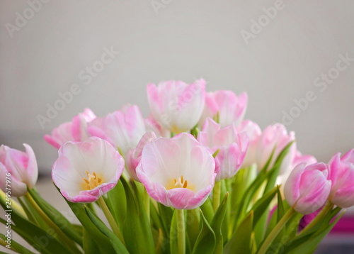 Fotografie, Obraz  A closeup of soft pink tulips for Mother's Day and as a Spring interior decorati