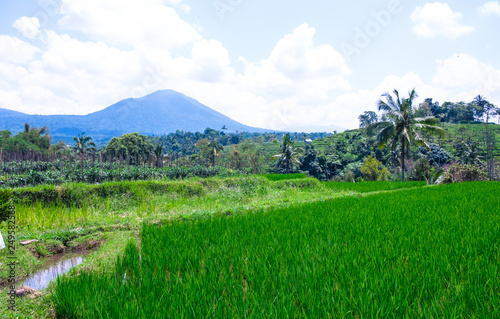 Keuken foto achterwand Groene Rice fields overlooking the mountain in Bali
