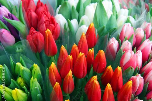 Fototapety, obrazy: fresh colorful tulips