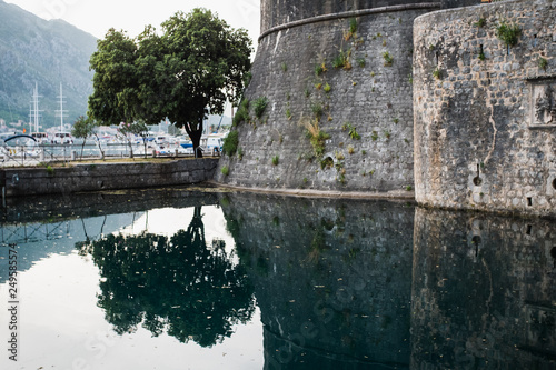Fotografiet  Tree and part of city walls with their reflections in the water in Kotor, Montenegro