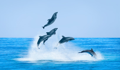 FototapetaGroup of dolphins jumping on the water - Beautiful seascape and blue sky