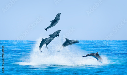 Fototapeta Group of dolphins jumping on the water - Beautiful seascape and blue sky