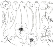 Collection Of Hand Drawn Plants. Botanical Set Of Sketch Flowers And Branches With Eucalyptus Leaves Isolated On White Background For Design, Print Or Fabric.