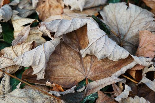 Fotografía  Beautiful autumn leaves in the park