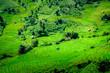 Leinwanddruck Bild - Rice fields on terraced of Mae Long, Chiang Mai, Thailand. Thailand landscapes.