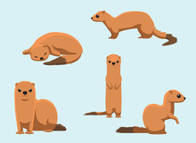 Invasive Species Small Indian Mongoose Vector Illustration