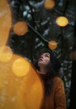 Bokeh Beauty Beneath Forest Lights
