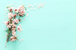 canvas print picture - photo of spring white cherry blossom tree on pastel mint wooden background. View from above, flat lay