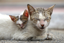 Vagrant Sick Cats. Homeless Wi...