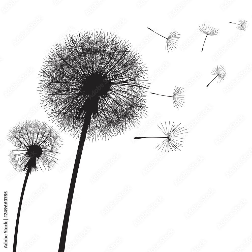 Fototapety, obrazy: Vector illustration dandelion time. Two dandelions blowing in the wind. The wind inflates a dandelion