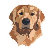 Head Golden Labrador Retriever Vector Illustration