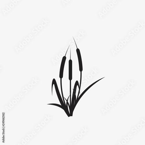 Fototapeta reeds illustration vector icon