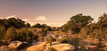 African Landscape In The Kruge...