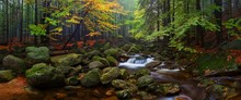 Autumn Or Summer River Bank With Beech Leaves. Fresh Green Leaves On Branches Above Water. Rainy Evening At Stream And Waterfall. A Misty Morning Near A Small River Deep In The Forests. Concept