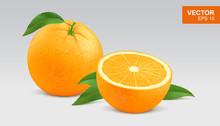 Realistic Yellow Orange Vector Illustration, Icon. Whole And Half Slice Of Orange