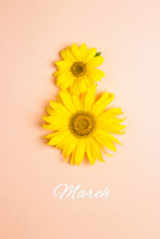 Sunflowers In Shape Of Number 8 On Pink Pastel Background. March 8.
