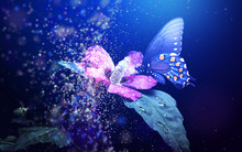 Abstraction, Butterfly On Violet Flower On A Blue Background.