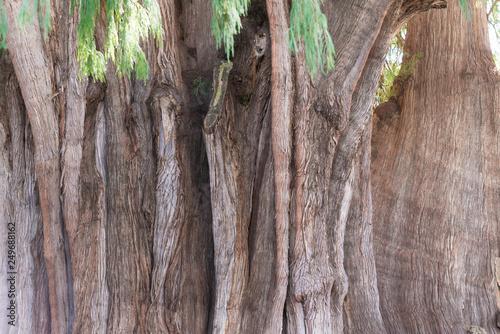 トゥーレの木 エルトゥーレ Canvas-taulu
