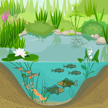 Pond Ecosystem And Life Cycle ...