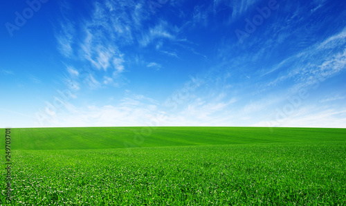 Foto op Plexiglas Weide, Moeras Green field and blue sky