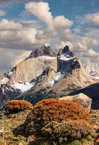 Fotografie, Obraz  Torres del Paine Flowers