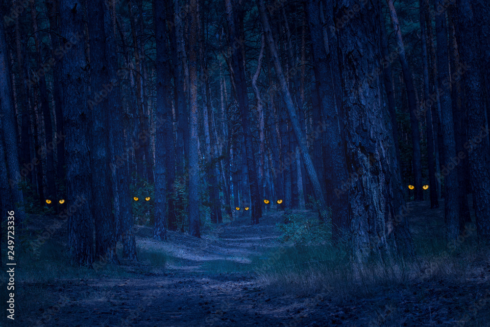 Fototapety, obrazy: dark and scary night forest with tall pines and wild animals with bright orange eyes